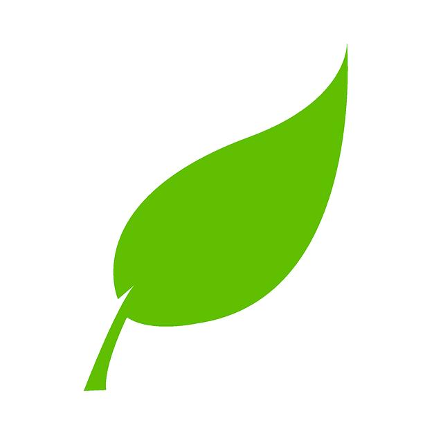 feuilles verte bio